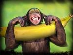 Macaco apegado à banana