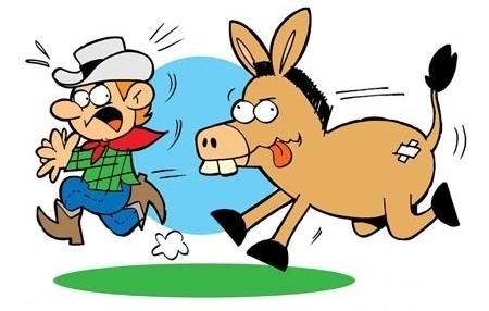 Corro de burro quando foge