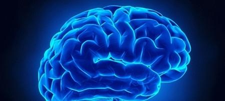 Nosso cérebro
