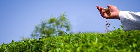 Plantar e colher