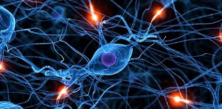 Neuropeptídeos