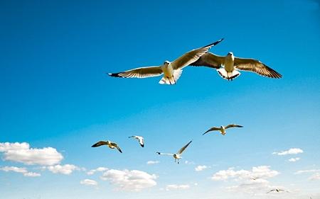 Precisamos voar juntos